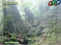 Yakushima Island - Forest of The Princess Mononoke