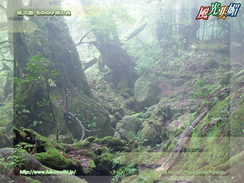 Yakushima Island - Forest of The Princess Mononoke