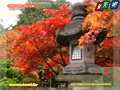 Stone lantern enclosed by autumn tint
