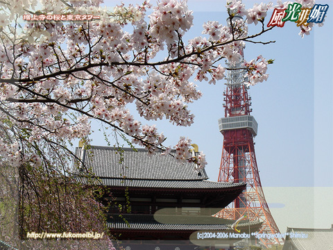 Cherry blossoms in Zojo-ji Temple and Tokyo Tower