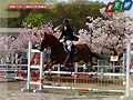Baji-kouen double-flowered cherry tree and equestrian event